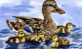 Mother Duck